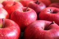 当館お奨め美味しいりんごをどうぞ